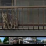[珍光景]Googleストリートビューにカメラ目線な猫